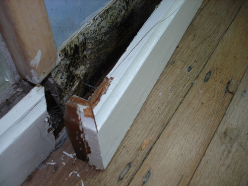 Mold And Water Damage Mold Testing