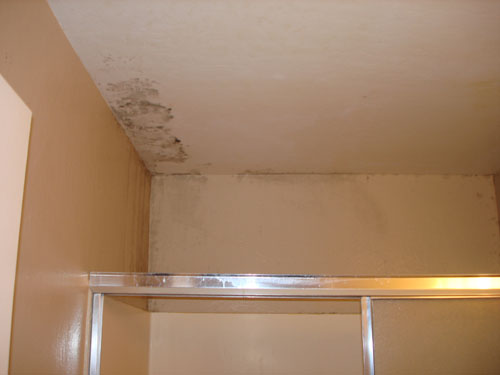 ... Mold And Water Damage Mold Testing For Mold In Bathroom Ceiling ...